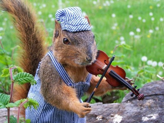 lalulutres:    A fiddlin' squirrel