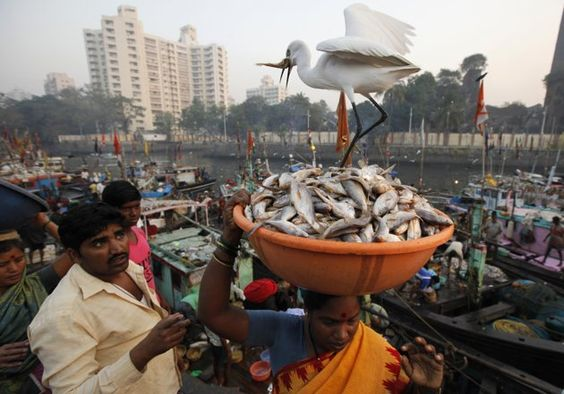 A crane eats a fish from a tub of fish at a wholesale market at a fish harbour in Mumbai