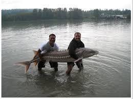 Resultado de imagem para pesca