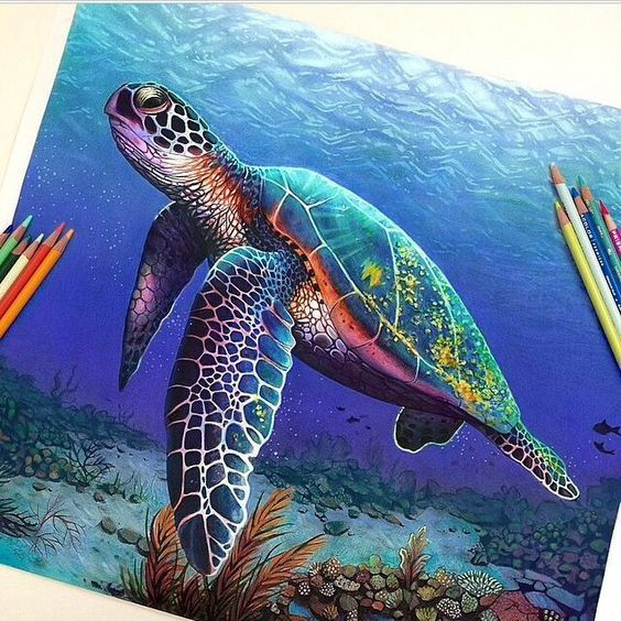 How To Make A Realistic Skin Blending Technique Turtle Painting Color Pencil Art Sea Turtle Art