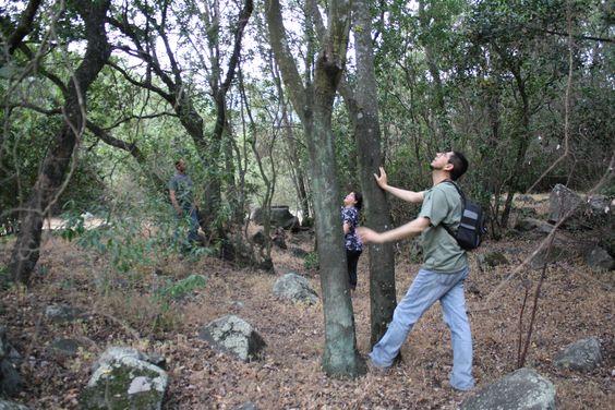 Observación de la Naturaleza