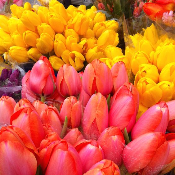 Tulips at the Farmers' Market this morning.