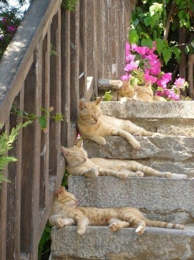 Um, dois, três gatinhos...