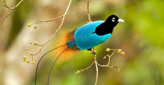 Este extraño pájaro que pareciera estar bailando