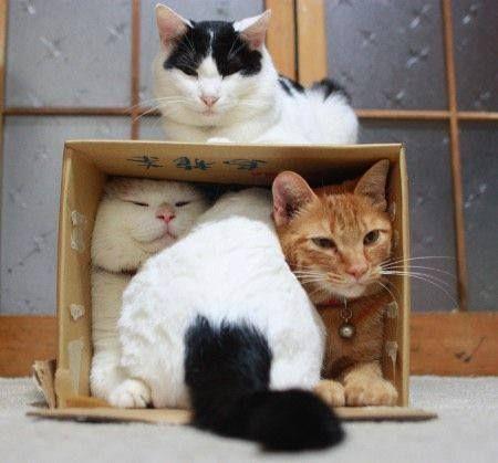 Un amour de chat dans une boite !