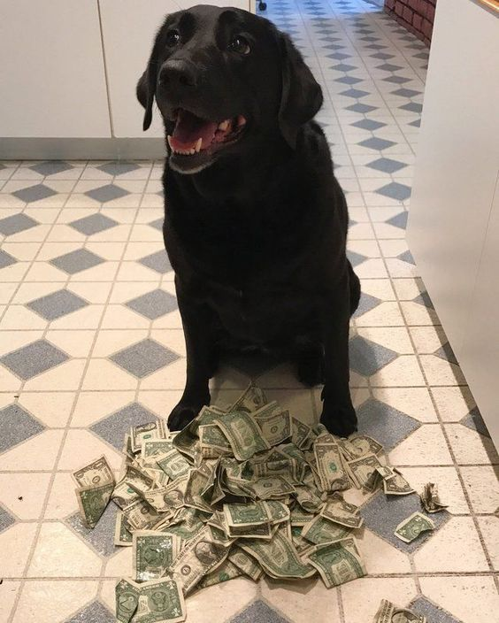 Has your dog ever eaten your money?