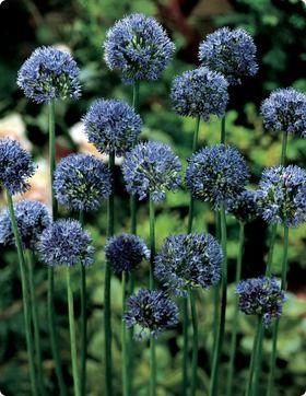 cheap flowers des moines iowa