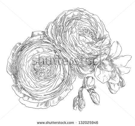 Ranunculus Vektory a vektorové kliparty | Shutterstock