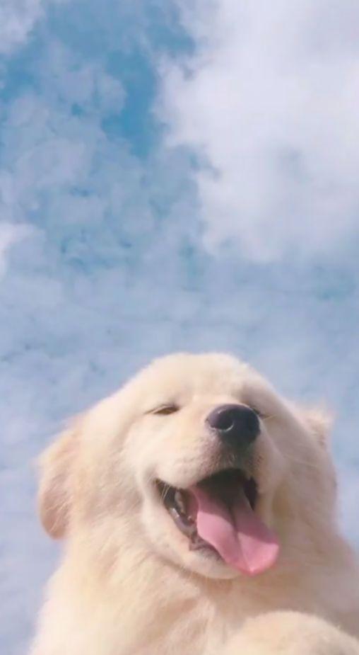 Cute Dogs Aesthetic Wallpaper Cute Cute Dog Wallpaper Cute Animals Dog Wallpaper