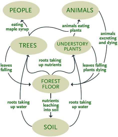 images about ecosystems  systems thinking  on pinterest    ecosystem diagram   posted on august    by marine
