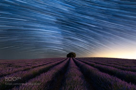 Startrail over lavender field. by Hgw20. Please Like http://fb.me/go4photos and Follow @go4fotos Thank You. :-)