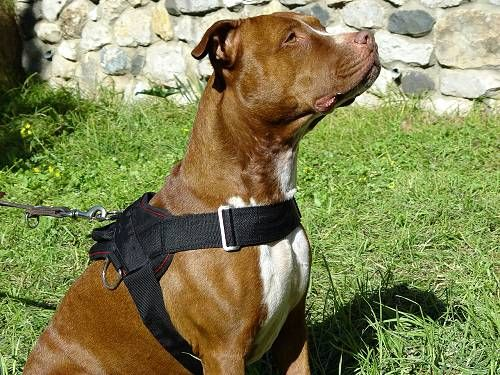 5974371d46de4e5405aacd9946ccdfa3 dog training equipment training dogs pitbull with nylon vest harness dogsuk autumn winteriscoming wire dog harness at bayanpartner.co