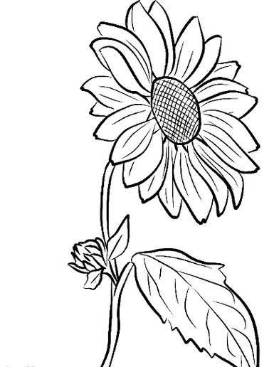 Menakjubkan 14 Gambar Bunga Matahari Hitam Putih Simple Koleksi Foto Wallpaper Dan Sketsa Bunga Matahari Dalam Di 2020 Lukisan Bunga Matahari Halaman Mewarnai Bunga