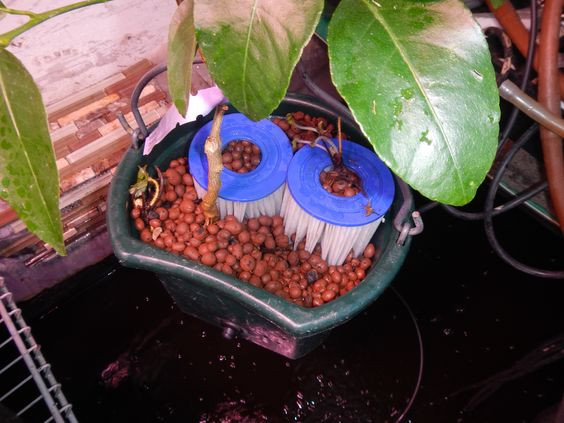 Bio Filter Bucket full of Strawberries, Lime Tree and 2 Bio-Filters Plug and play