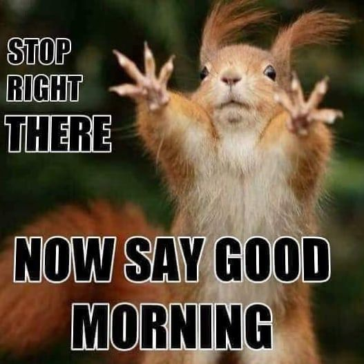 Stop Right There Morning Quotes Funny Funny Good Morning Memes Funny Good Morning Quotes