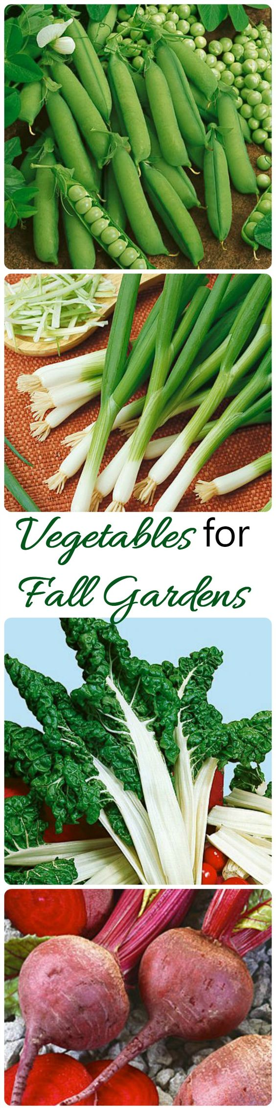 Summer is coming to an end but there are lots of vegetables that you can grow well into the fall.