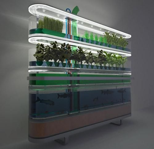 Tilapia farming aquaponics and a concept on pinterest for Aquaponic source