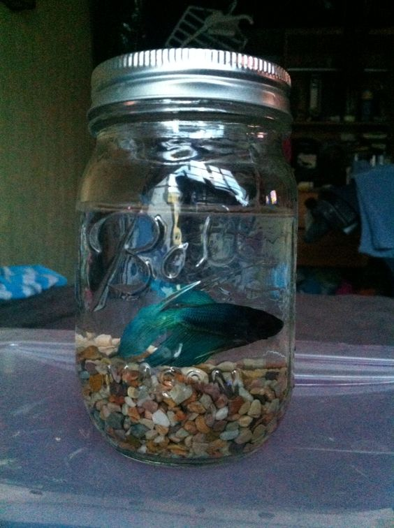 Pinterest the world s catalog of ideas for Fish in a jar