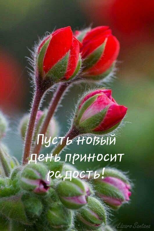Horoshego Dnya Cvety Den Rozhdeniya Fotografiya Citaty Dobroe Utro