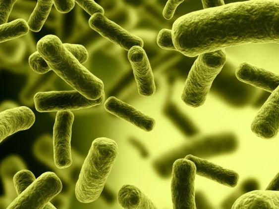 ¿Cuántas #bacterias acumulamos en un día? #salud y #bienestar