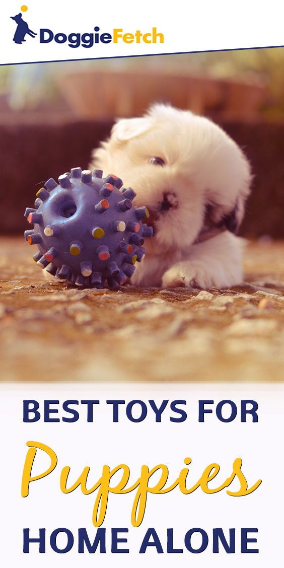 Best Toys For Puppies Home Alone Buying Advice Top 5 Reviews For 2017 Best Toys For Puppies Toy Puppies Puppies