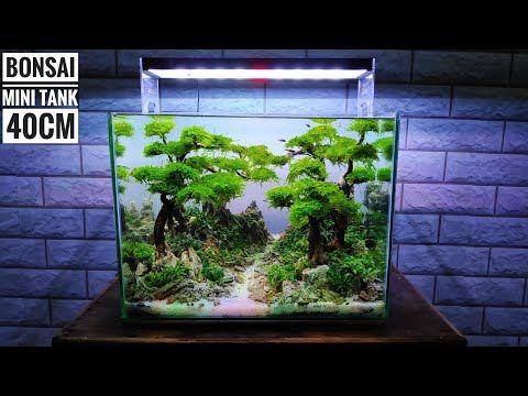 Pin Oleh Taz Di Akvuarium Aquascaping Bonsai Tanaman