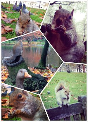 Friendly and hungry squirrels, pictures by Shenzhen students