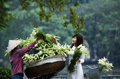 Mùa hoa Loa Kèn: Hanoi, Vietnam Travel, Asia Travel, Loa Kèn, Travels Vietnam Hanoi, Travel Vietnam, Ao Dai, Hoa Loa