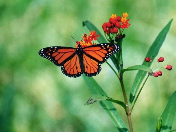 La Luz de tu Alma La vida siempre nos pone pruebas para transformar nuestro interior, fluir ante nuestros obstáculos y aceptarlos desde el Amor es la solución ante tan maravillosa experiencia. Namasté.