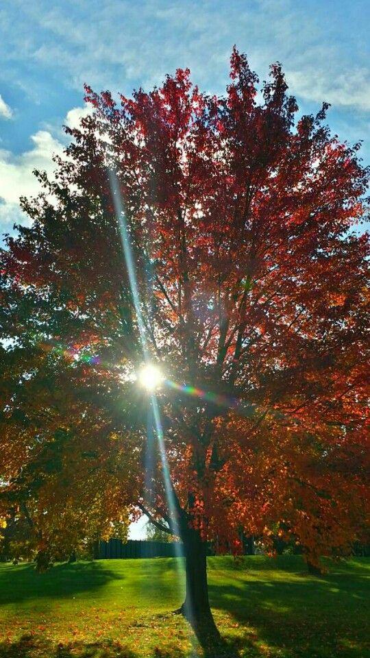 Love with the sun shining through!