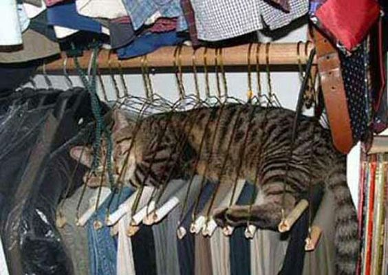 cats will do anything to get hair on your clothes
