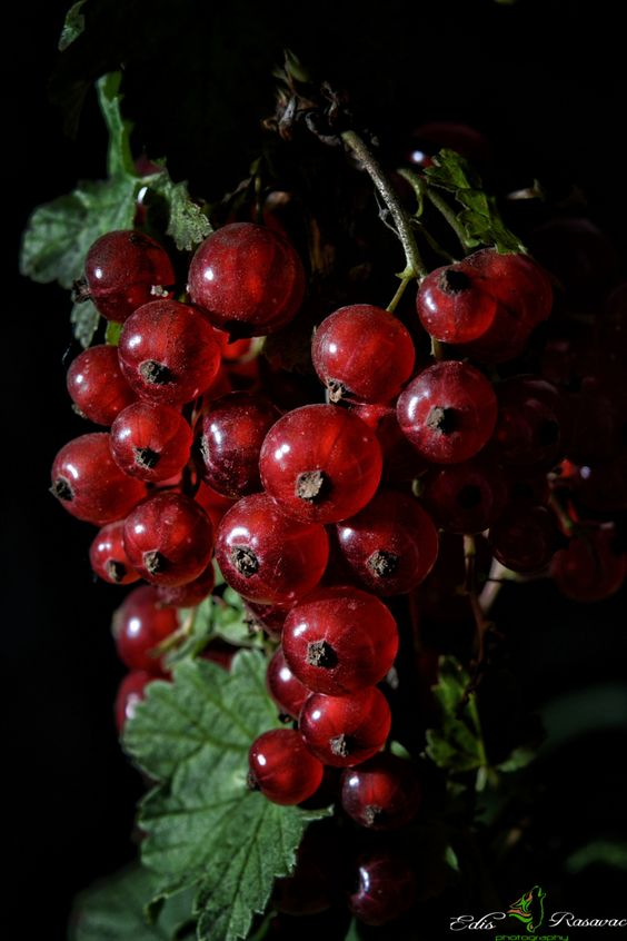 Red Currants by Edis Rasavac on 500px: