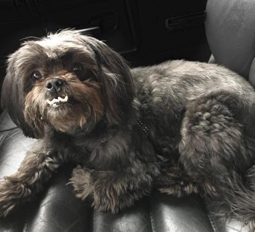 Adopt Mera On Petfinder Poodle Mix Dogs Dog Adoption Help Homeless Pets