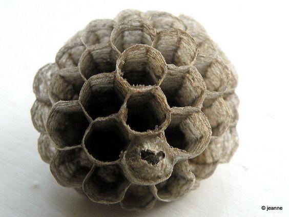 Wasp's nest photographed by Jeanne Kliemesch. via flickr
