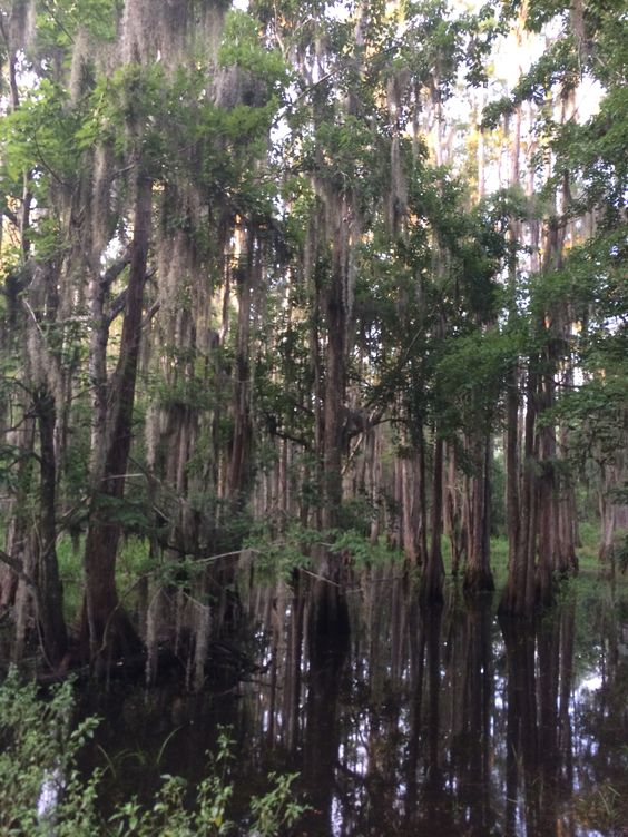 Roots of da swamp mon