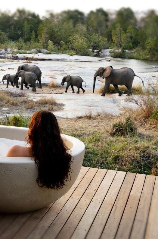 Wilde dieren spotten terwijl je een bad neemt. Het kan in de Londolozi Granite Suites - Kruger National Park, Zuid-Afrika.