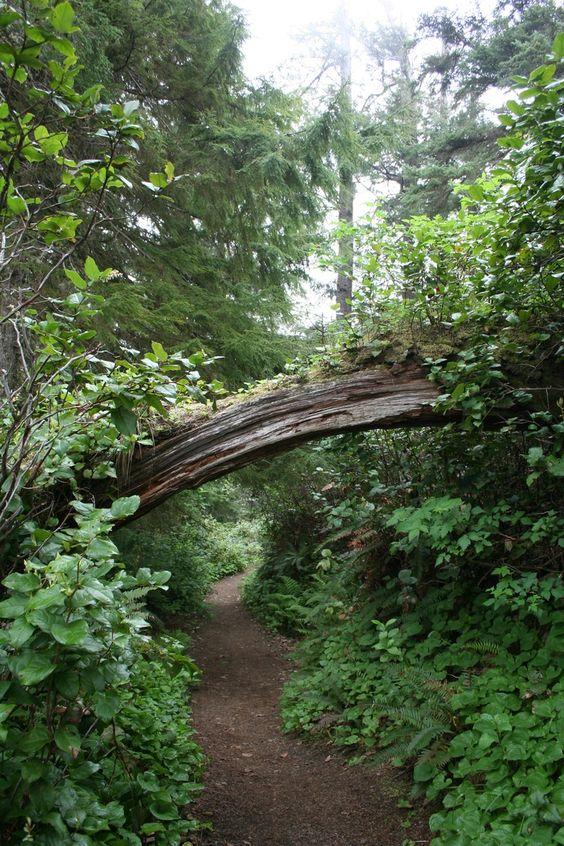 Ecola Park, Oregon Coast. Beautiful hiking trails, coastline, and Elk.