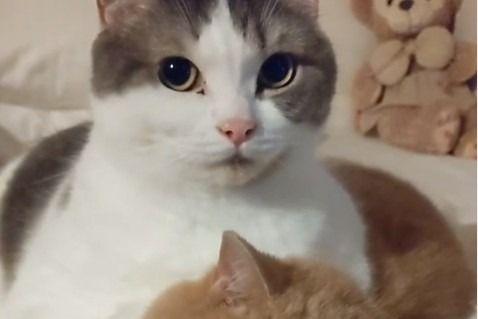 イケメンに撮ってにゃカメラを向けるとキメ顔になる猫のもち丸くんとのんびりうにちゃんがカワイイ かわいい猫 猫 うに