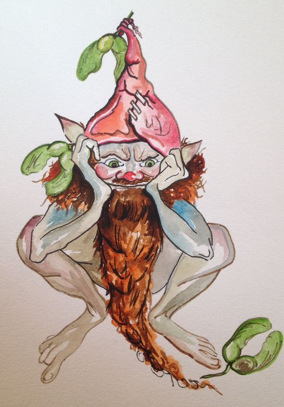 Sycamore Gnome