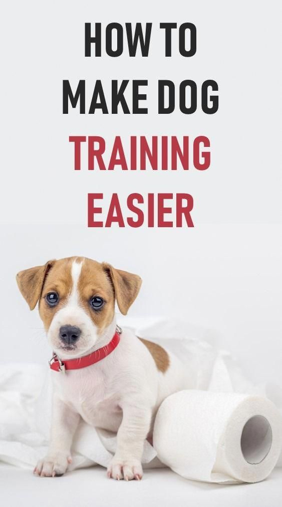 Neat Referred Dog Training Commands Search Our Dog Training Dog