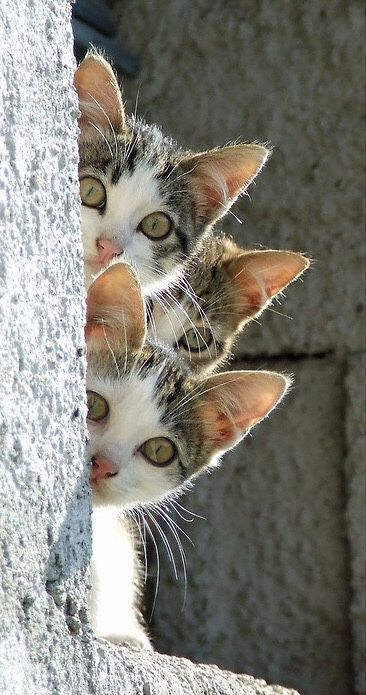 Kittens! What do they see?