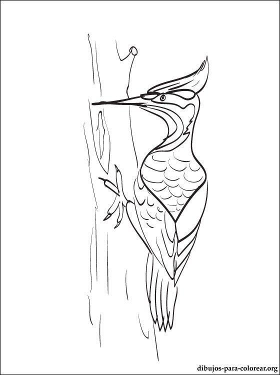 Pajaro Carpintero Para Dibujar Facil Buscar Con Google Pajaro Carpintero Pajaros Dibujos De Pajaro