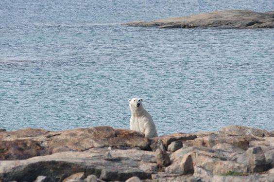 nunavut polar bear hunting regulations