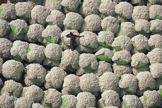 Las balas de algodón, Costa de Marfil.