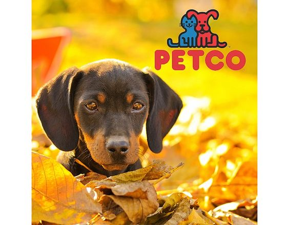Petco | Up to 60% Off Sitewide! Sale (petco.com)