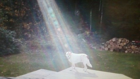 Not Photoshopped: Beam of Light Shines on Fallen Soldier's Miracle Dog. Photo taken by ABC News Kimberly Launier. Read article.