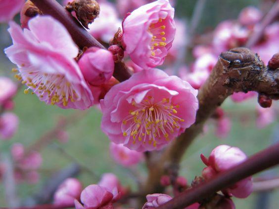 isao-takeda: 2016 年 3 月 12 日 大阪 城 公園 · 大阪 城 桃園 大阪 市 中央 区