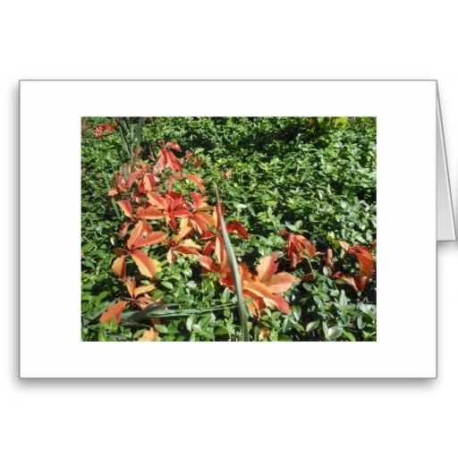 A Touch of Fall Card http://zazzle.com/rinchen365flower*