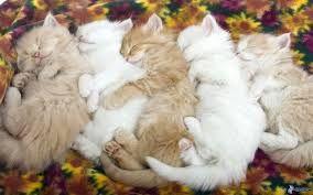 Risultati immagini per gattini