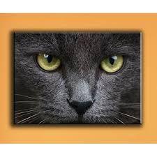 """Résultat de recherche d'images pour """"tableau chat"""""""